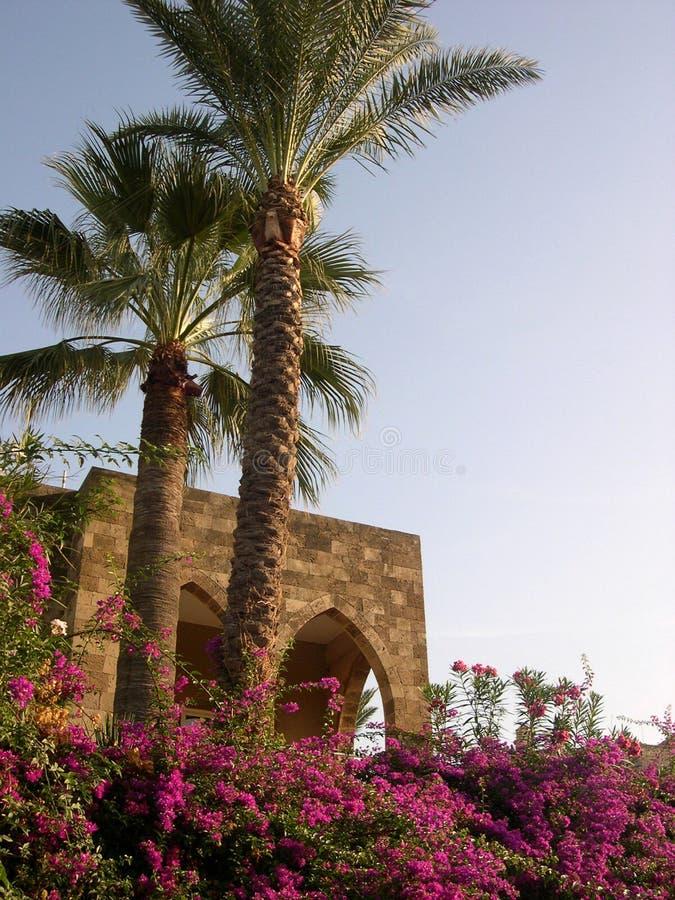 Palmen stockbilder