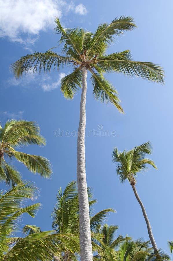 Palmen. lizenzfreie stockfotos