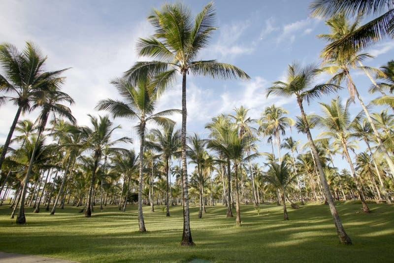 Download Palmen stock afbeelding. Afbeelding bestaande uit tuin - 29512189