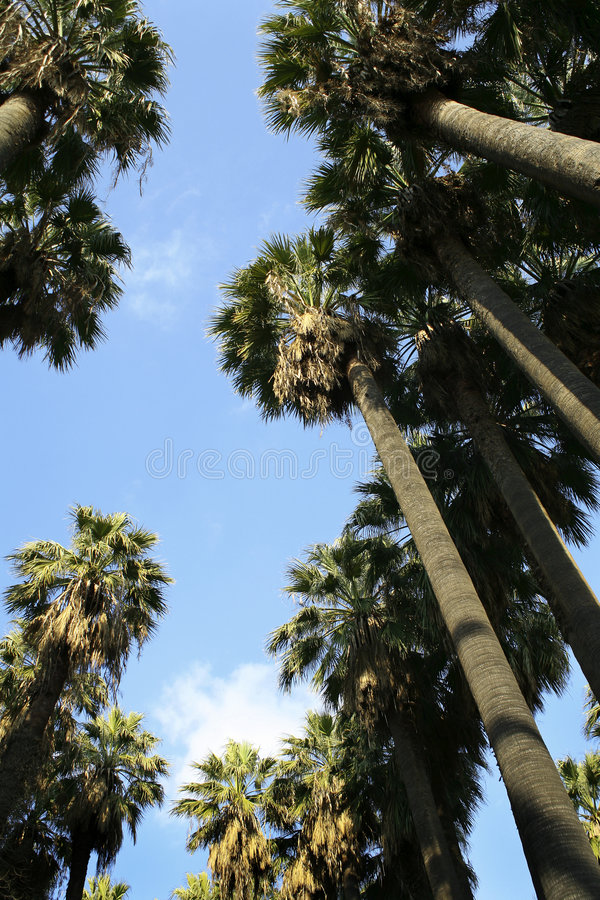 Palmen stockfotografie