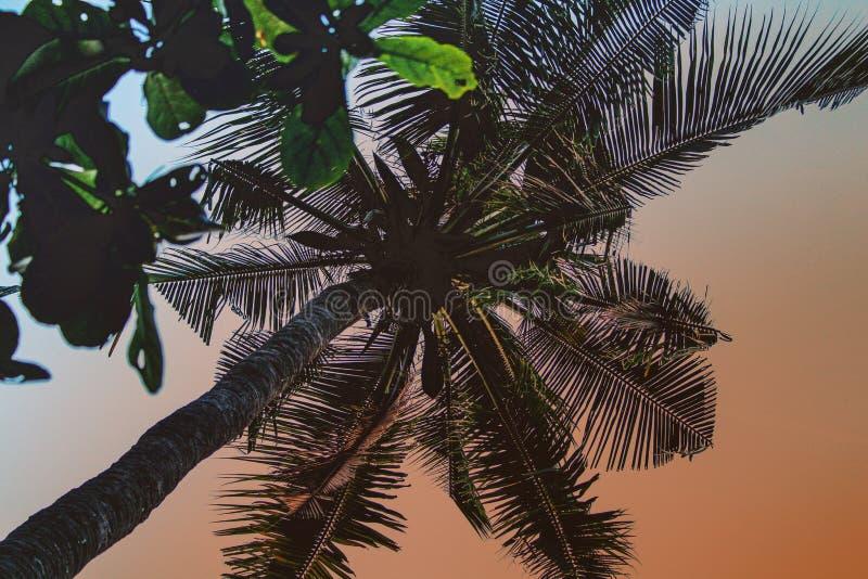 palmen lizenzfreies stockbild