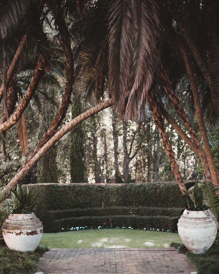 Palmen aan Luxetuin stock afbeeldingen