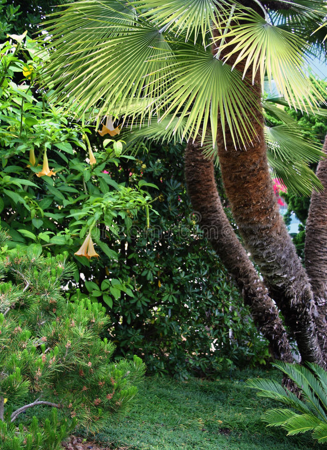Palmen abstracte achtergrond royalty-vrije stock foto's