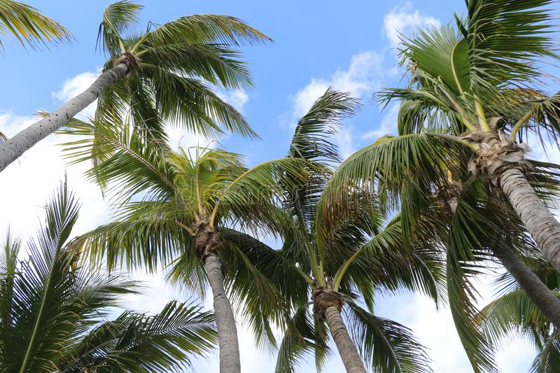 Palmen auf blauem und weißem Himmel lizenzfreies stockbild
