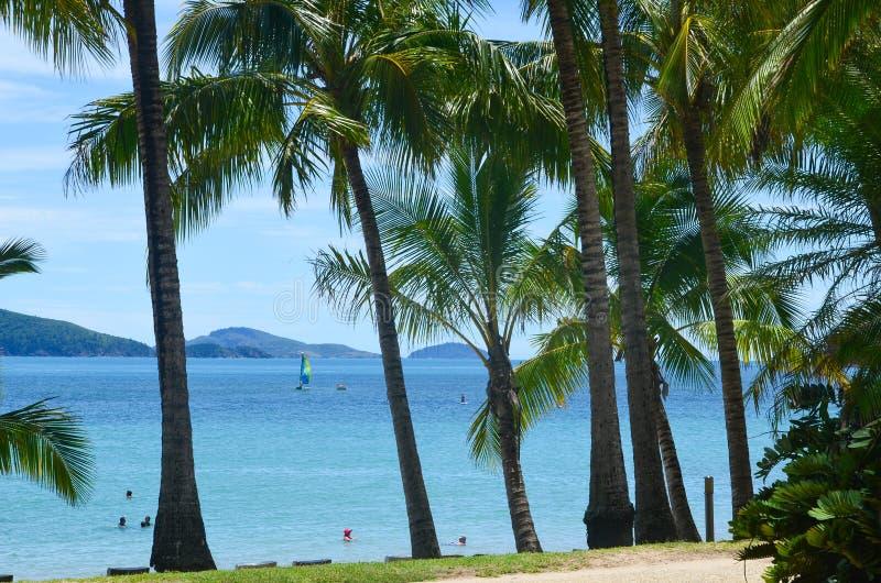 Palmen auf Cateye-Strand stockbilder