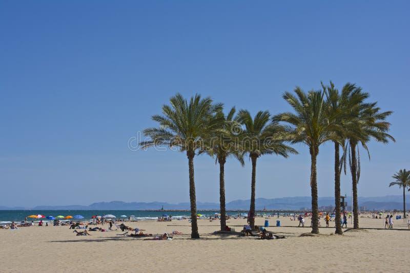 Palmen auf crowdy Cullera-Strand lizenzfreies stockbild