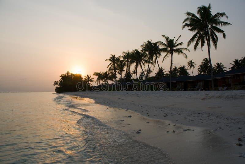 Palmen auf dem Morgenstrand stockbilder