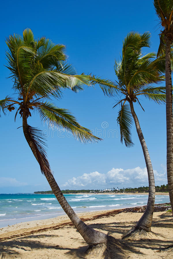 Palmen auf dem Strand lizenzfreie stockbilder