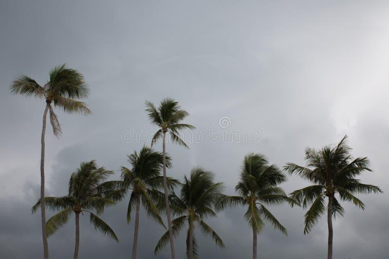 Palmen auf dem Strand mit bewölktem Himmel stockbild