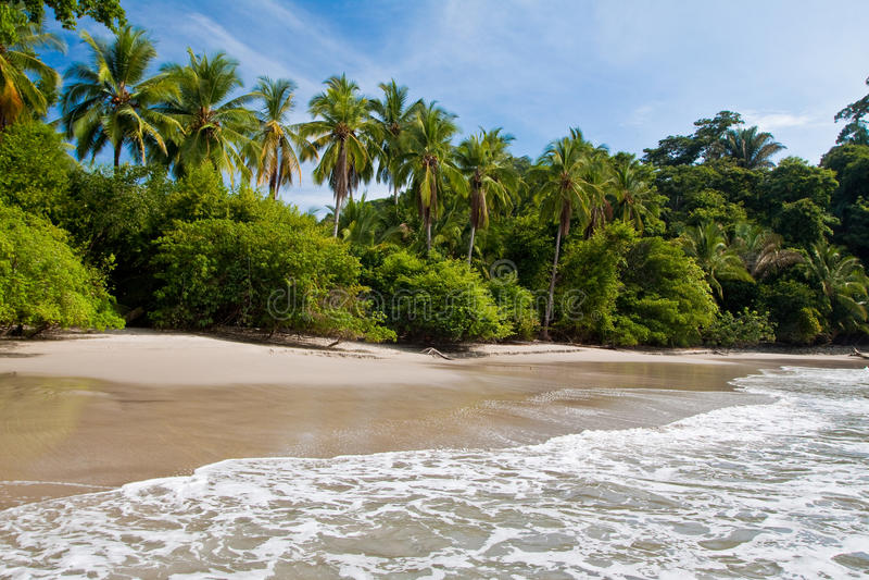 Palmen auf dem Strand nahe mit blauem Himmel lizenzfreies stockbild