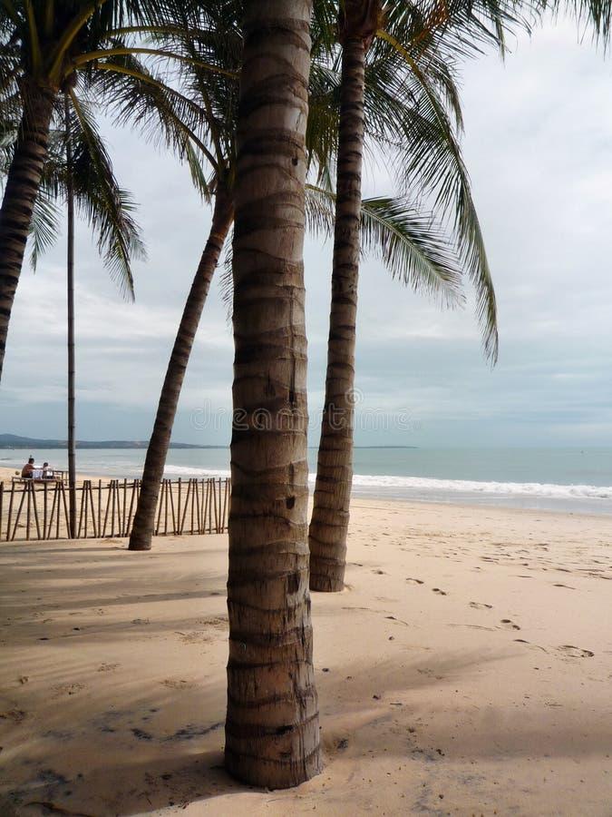 Palmen auf dem Strand und dem ruhigen Ozean lizenzfreies stockbild