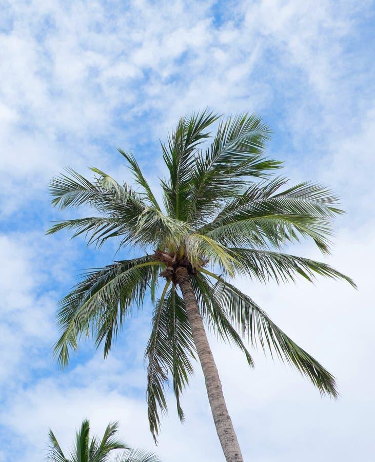 Palmen auf hellem lizenzfreie stockfotos