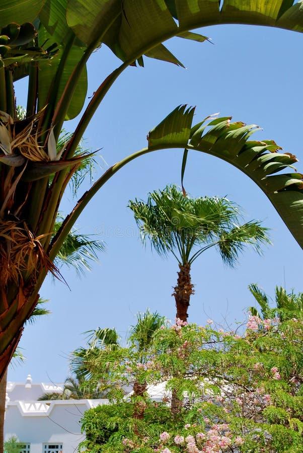 Palmen auf Hintergrund des blauen Himmels lizenzfreie stockfotos