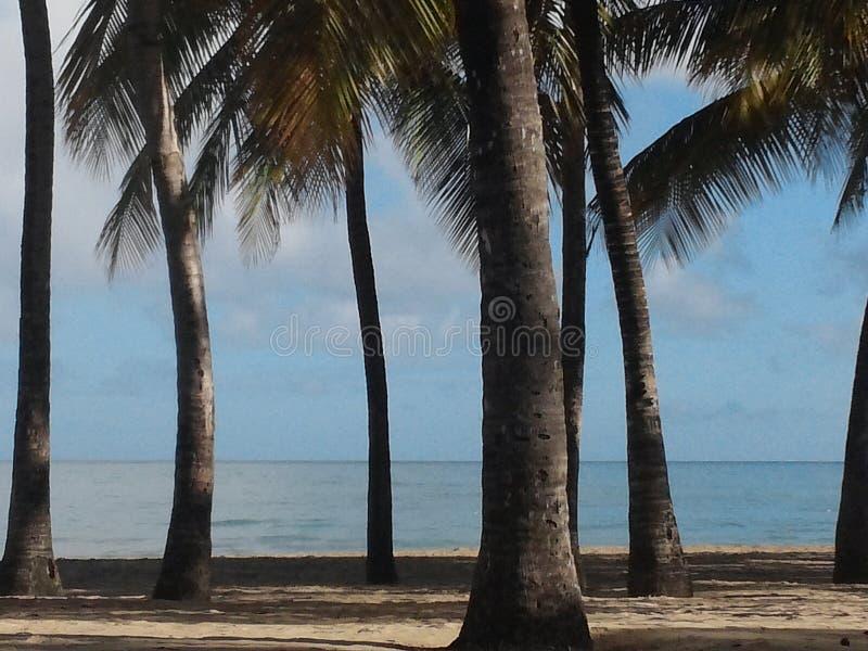 Palmen auf leerem Strand lizenzfreies stockbild