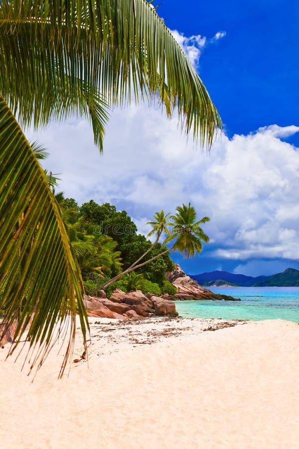 Palmen auf tropischem Strand stockfotos