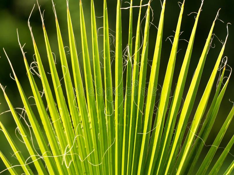 Palmen-Baumast Tropische Baumfotonahaufnahme lizenzfreie stockfotos
