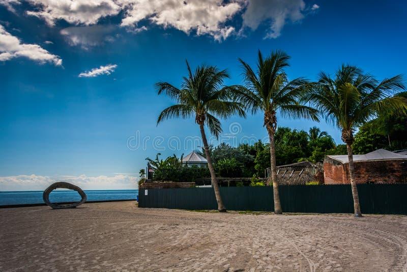 Palmen bei Higgs setzen, in Key West, Florida auf den Strand lizenzfreies stockbild