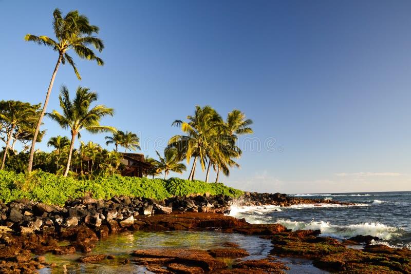 Palmen bei Lawai setzen - Poipu, Kauai, Hawaii, USA auf den Strand stockbild