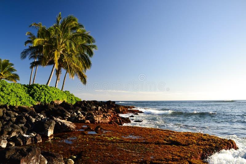 Palmen bei Lawai setzen - Poipu, Kauai, Hawaii, USA auf den Strand stockfoto