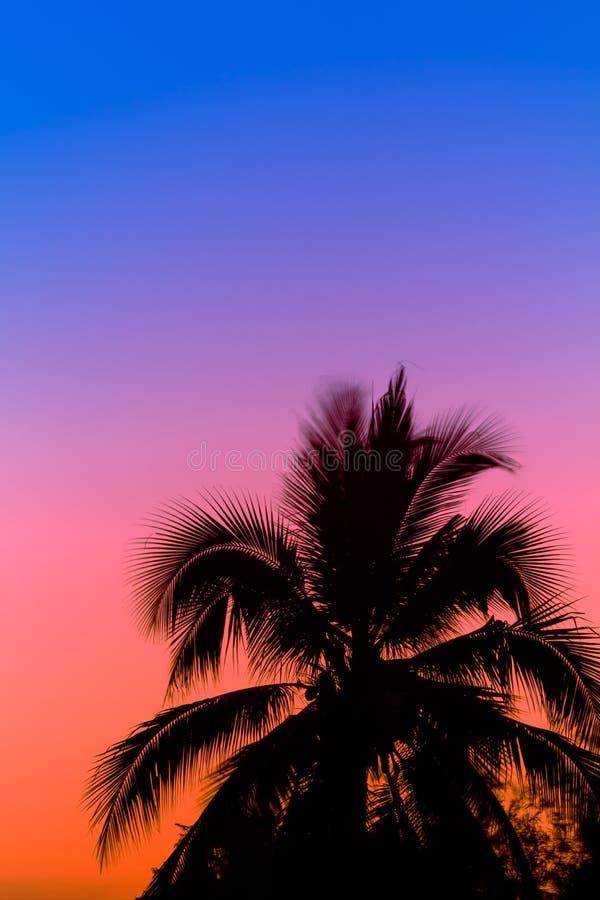 Palmen bei Sonnenaufgängen stockbild