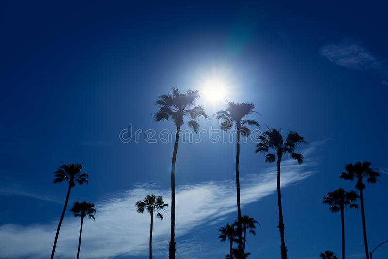 Palmen in Bereich Süd-Kaliforniens Newport stockfotos