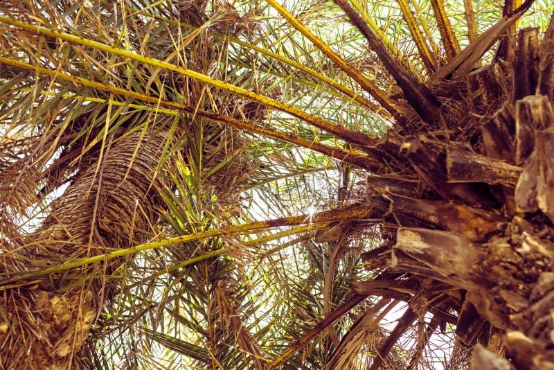 Palmen bij tropisch gestemd strand, wijnoogst en gestileerde film royalty-vrije stock afbeeldingen