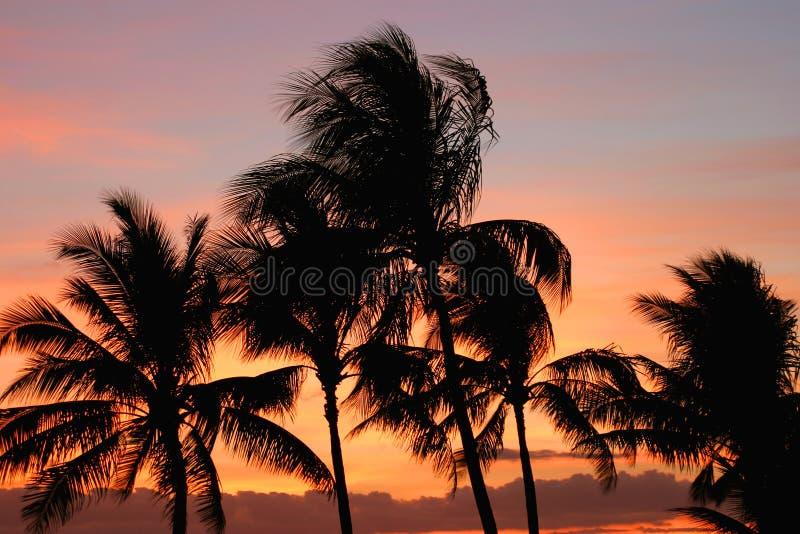 Palmen bij Zonsondergang royalty-vrije stock fotografie