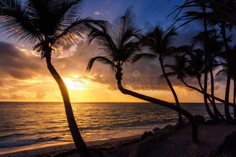 Palmen bij zonsopgang of zonsondergang op het Caraïbische overzees stock fotografie