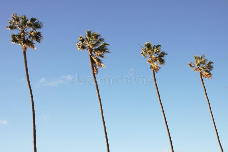 Palmen in blauwe hemel royalty-vrije stock foto