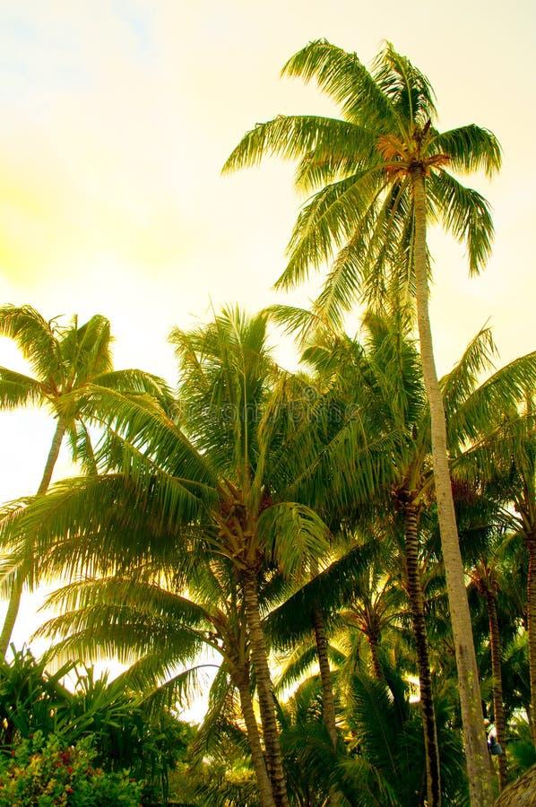 Palmen in Bora Bora stock fotografie