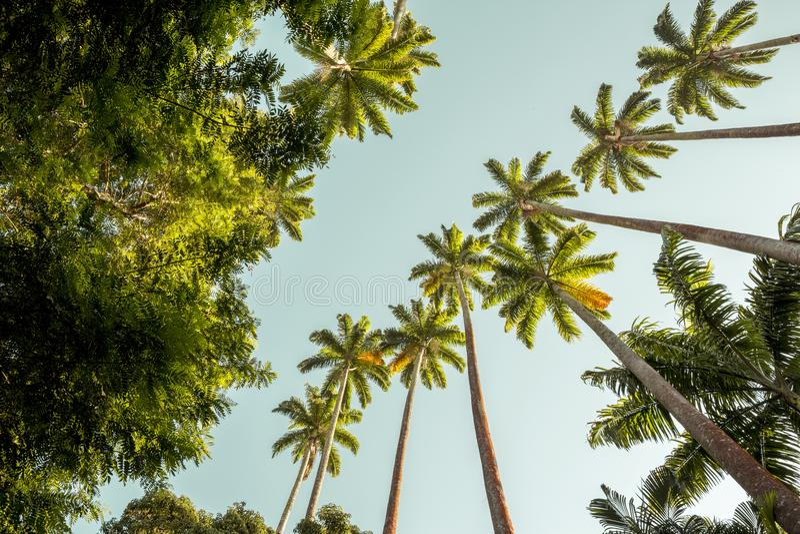 Palmen in Botanische Tuin in Rio de Janeiro, Brazilië royalty-vrije stock fotografie