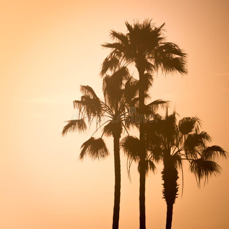 Palmen in Californië van de Zonsondergangwestkust royalty-vrije stock afbeelding