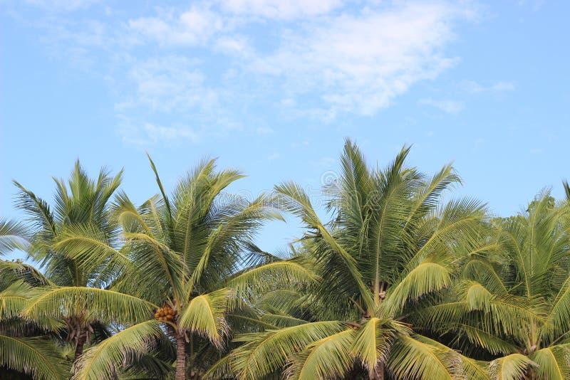 Palmen in Costa Rica lizenzfreies stockfoto