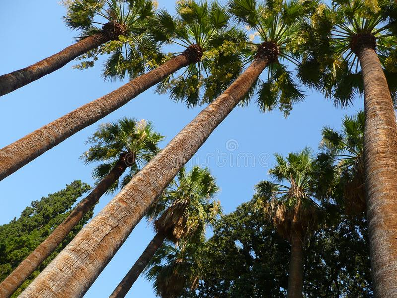 Palmen in de blauwe hemel royalty-vrije stock afbeelding