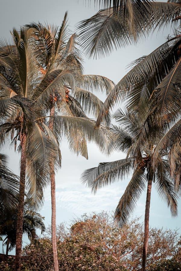 Download Palmen In De Keerkringen Op Een Hete De Zomerdag Toerisme In Exotisch Stock Afbeelding - Afbeelding bestaande uit achtergrond, strand: 107700245