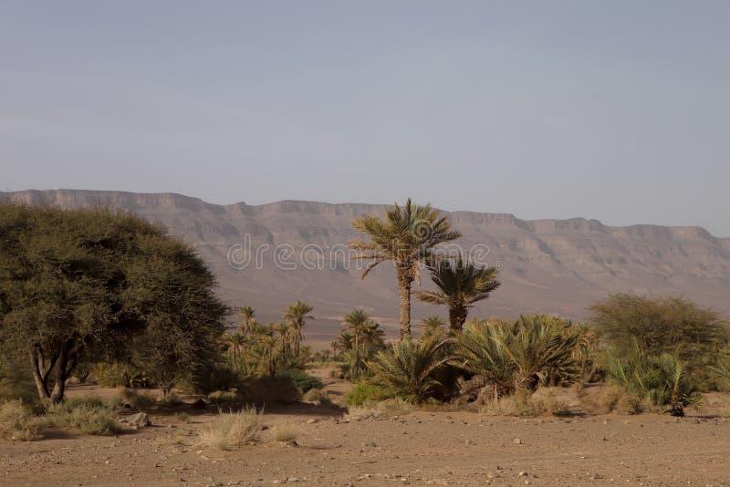 Palmen in de uitlopers, Marokko royalty-vrije stock foto
