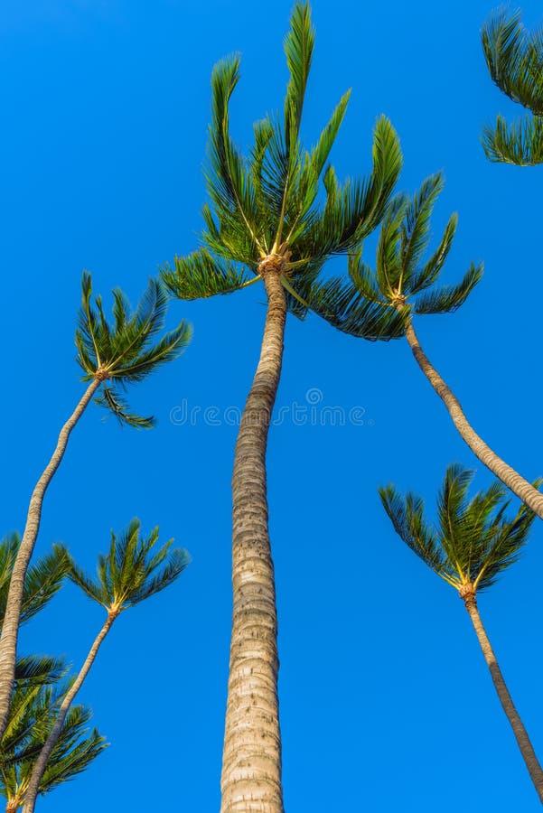 Palmen in de wind tegen blauwe hemel royalty-vrije stock afbeelding