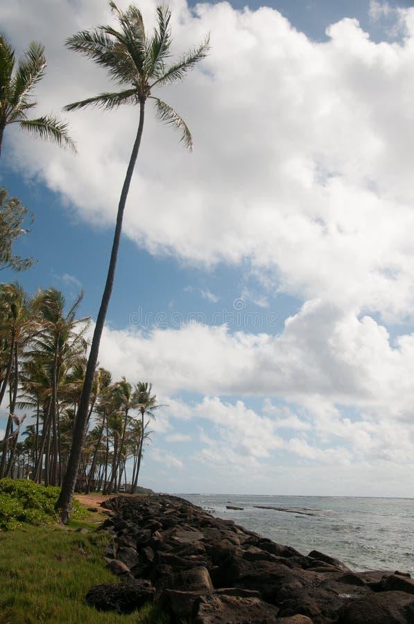 Palmen in de wind van het Kapaa-Strand op Kauai royalty-vrije stock foto