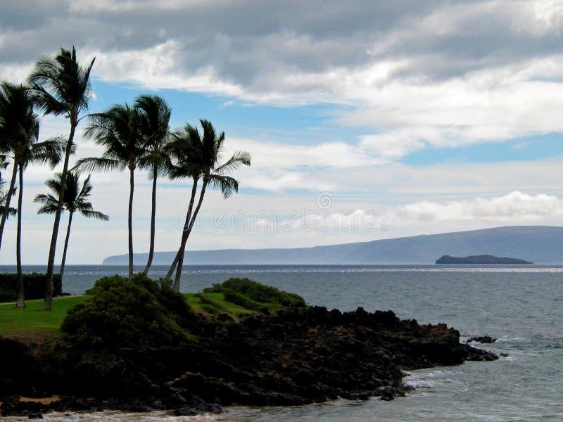 Palmen in der Brise stockfotografie