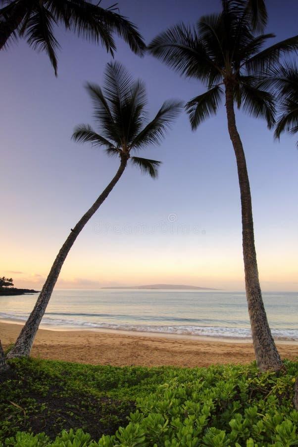 Palmen an der Dämmerung auf Ulua setzen, Maui, Hawaii auf den Strand lizenzfreie stockfotos