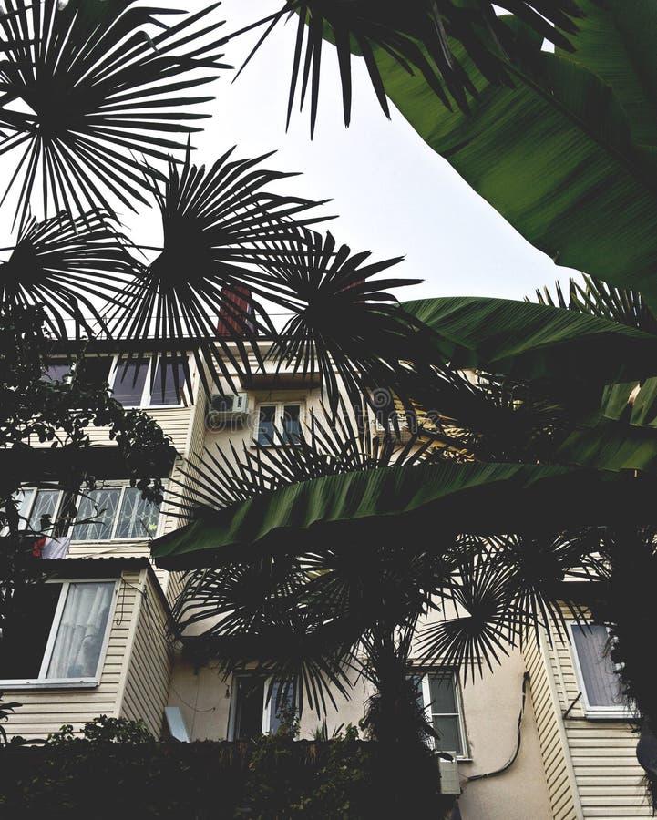 Palmen in der Stadt stockbilder