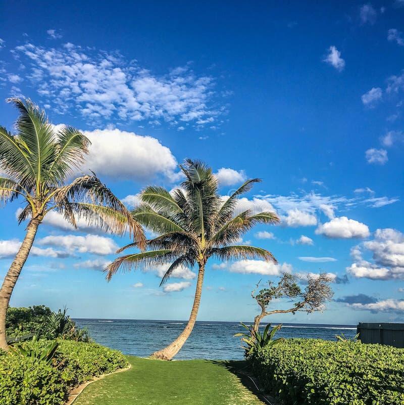 Palmen des blauen Himmels und lizenzfreies stockbild