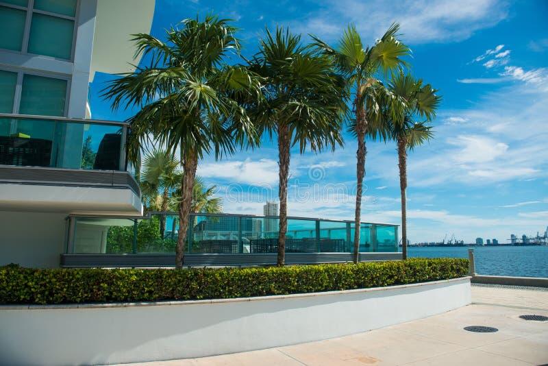 Palmen dichtbij de flatbouw in Miami de stad in bij zonnige dag royalty-vrije stock afbeeldingen