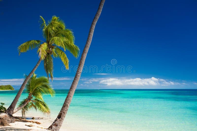 Palmen, die über tropischem Strand hängen lizenzfreie stockfotos