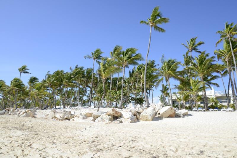 Palmen, die in der Brise durchbrennen stockfotografie