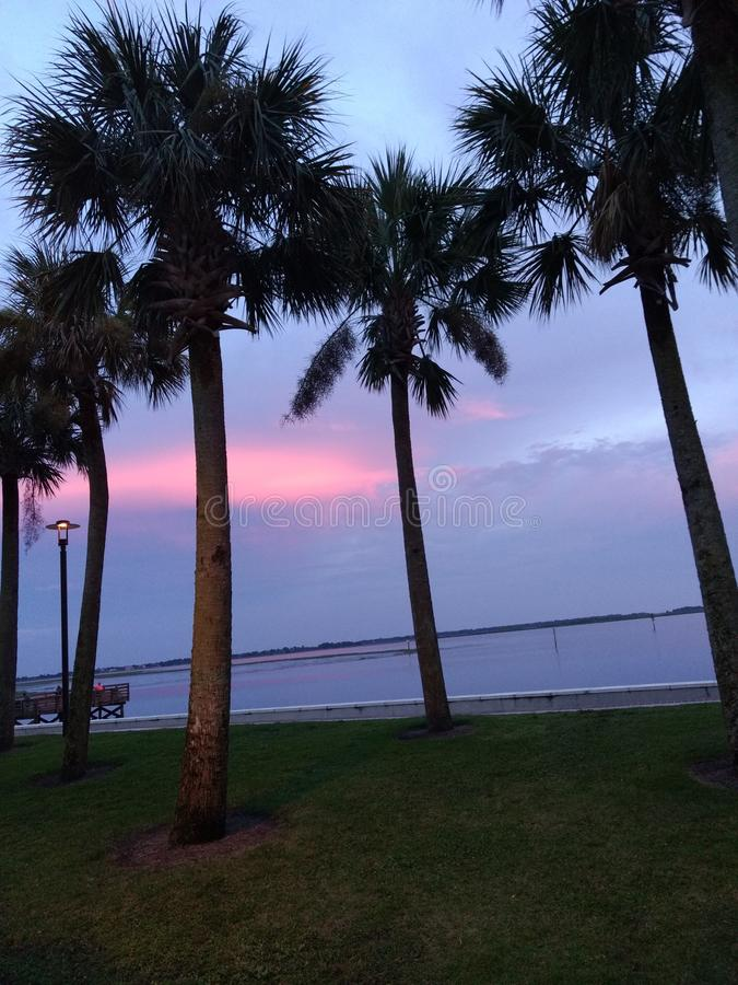 Palmen die middagwind vangen royalty-vrije stock foto