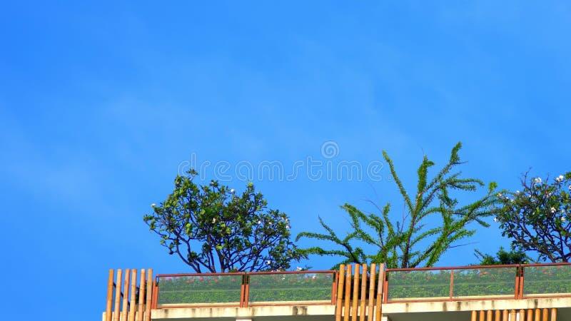 Palmen die op een wolkenkrabber groeien De ruimte van het exemplaar stock foto's