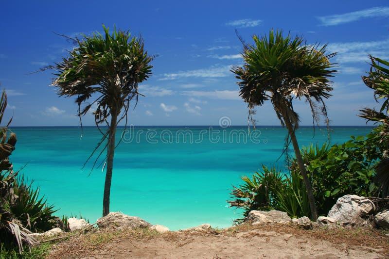 Palmen door Oceaan stock fotografie