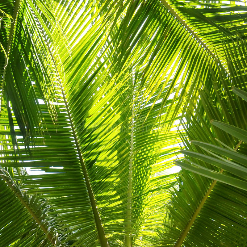 Palmen-Dschungel stockfotografie