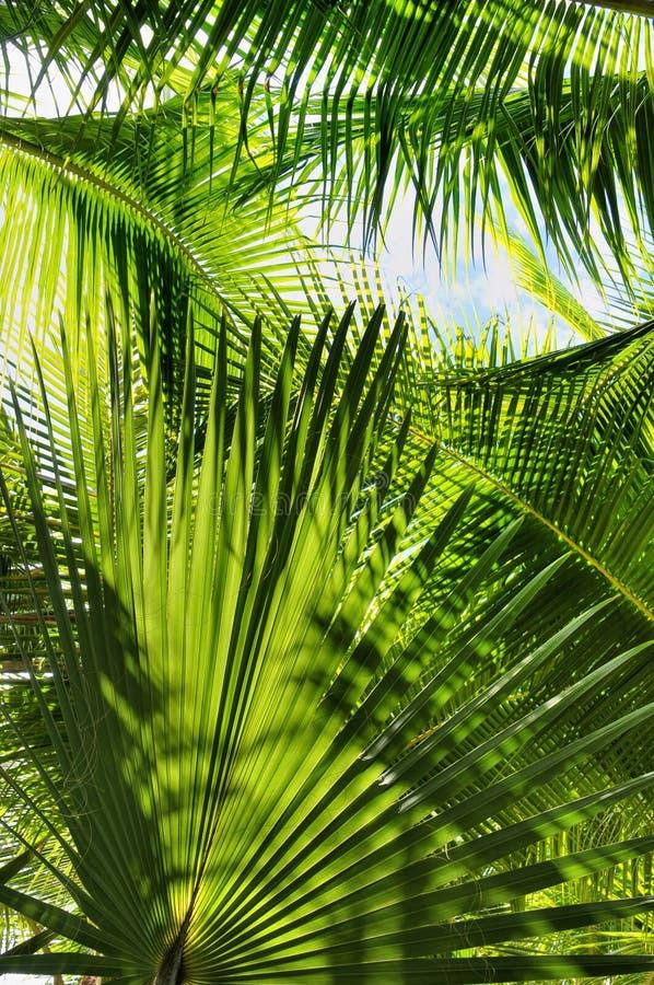 Palmen-Dschungel stockbilder